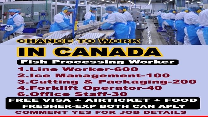 canada needs fish processing workers