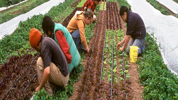 canadian farm wants fresh graduates